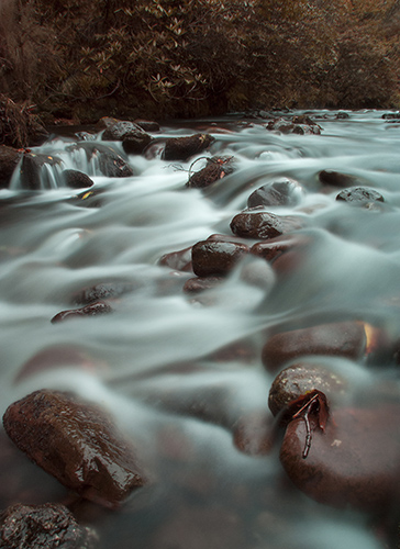 Glengarra Woods_2_Small