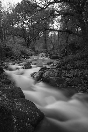 Glengarra Woods_3_B&W_Small