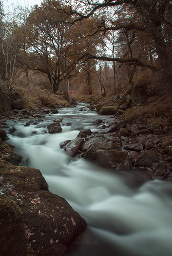 Glengarra Woods_3_Small