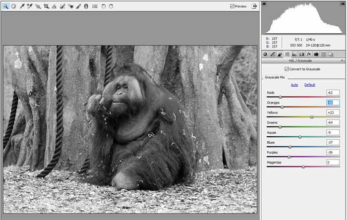 dublin-zoo-orangutan_1