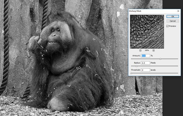 dublin-zoo-orangutan_2
