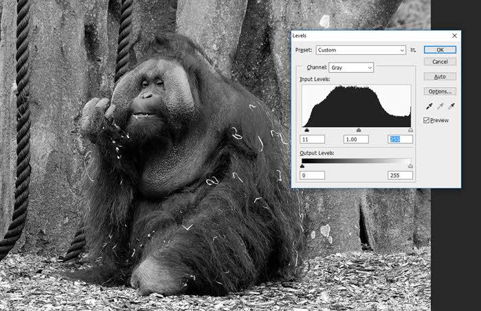 dublin-zoo-orangutan_3