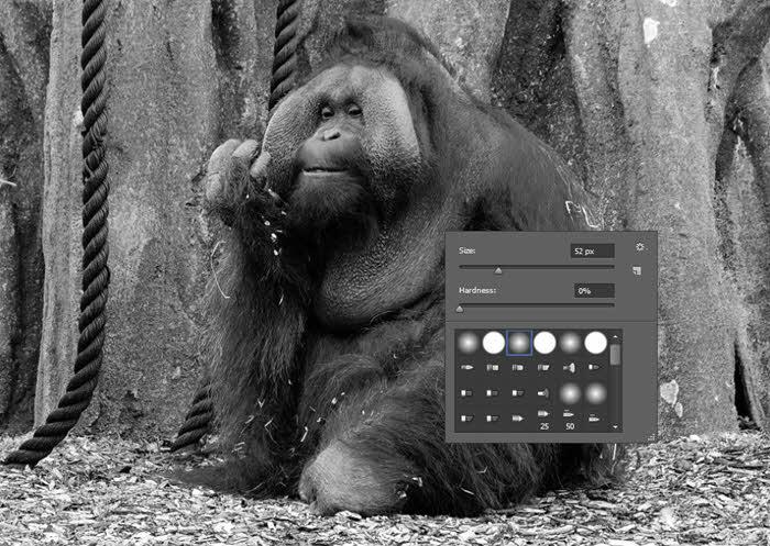 dublin-zoo-orangutan_4